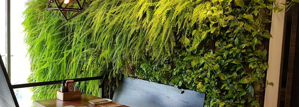 دیوارسبز Higreenwall